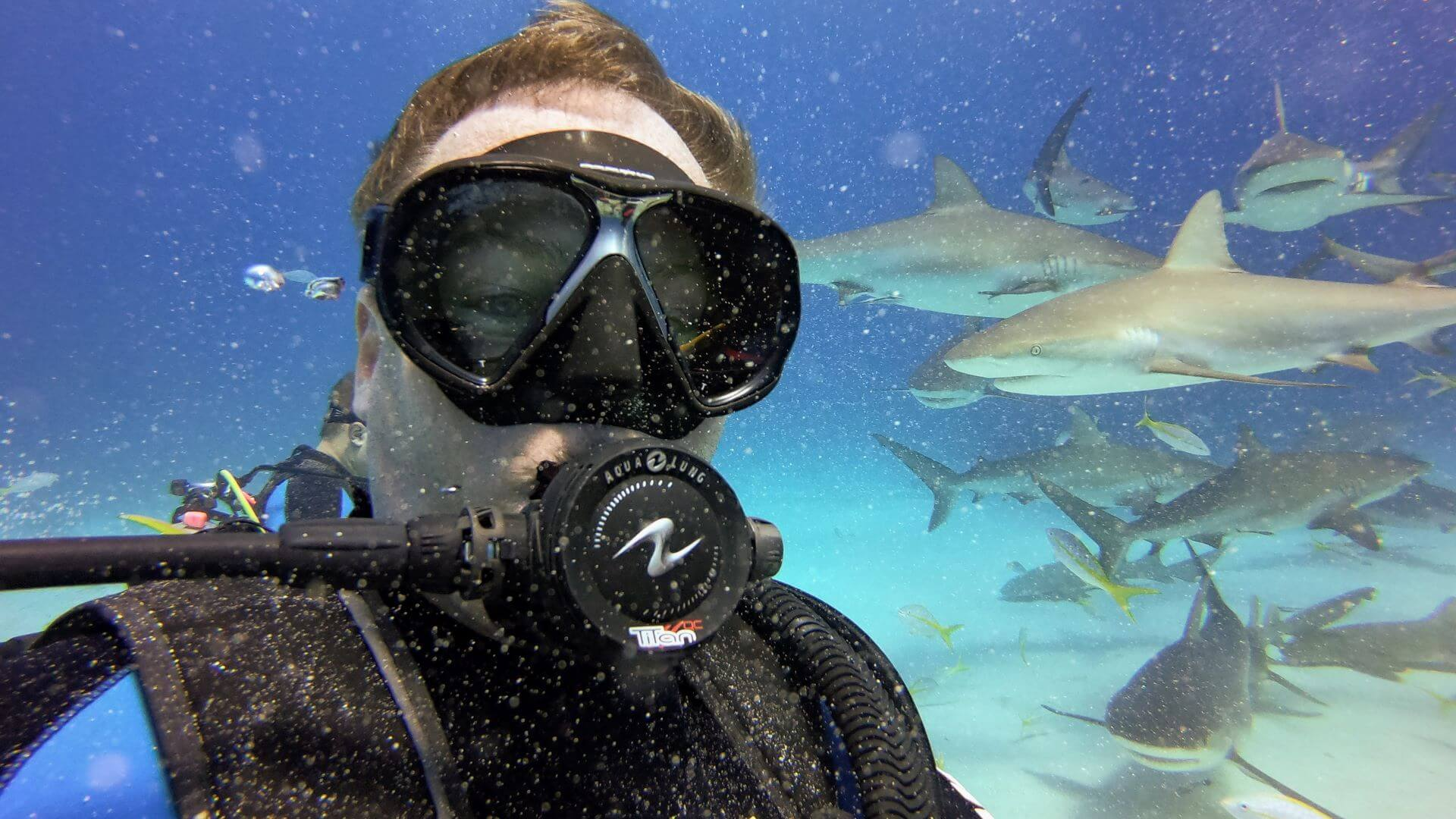 Haie füttern Bahamas Michael Dunker